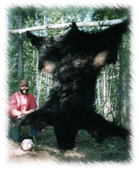 alaska black bear hunting